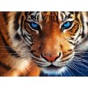 Blue Eyed Tiger Diamond Painting Kit