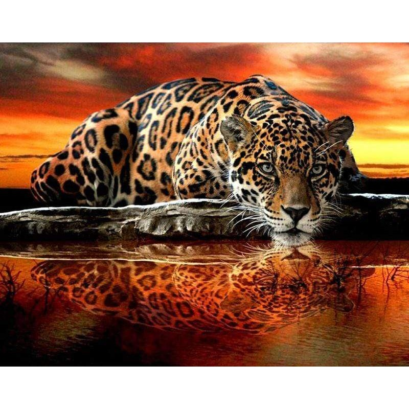Leopard Reflection D...